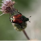 Acerca del insecticida Sevin