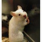 Información sobre el veneno para ratas