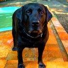 ¿Qué medicamentos humanos  puedes darle a un perro para el dolor articular?