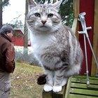 La mejor fuente de Omega 3 para los gatos