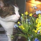 Dosagem de loratadina para gatos