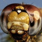 ¿Qué son los insecticidas?