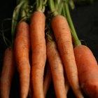 ¿Dónde están ubicadas las semillas en una zanahoria?