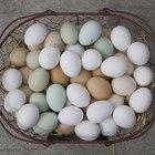 ¿Cuánto tiempo pueden estar los huevos duros fuera del refrigerador?