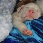 É normal uma cadela ter diarreia depois de uma gravidez?