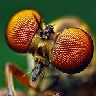 Quanto tempo após a morte as larvas se formam?