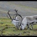 Qual o impacto humano sobre a tundra?