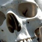 Educación necesaria para la antropología forense