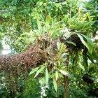 Información sobre las orquídeas