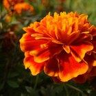Las plantas que toleran el sol todo el día