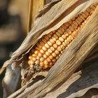 Pode-se usar palha de milho no adubo?