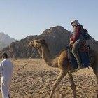 Cómo vestirse en el desierto