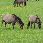 Tipos de grama para cavalos