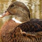 List of modern duck decoy carvers