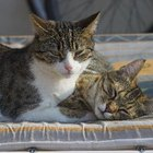 How to Keep Other Pets From Catching a New Cat's Ear Mites