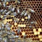 Por que as abelhas são atraídas pelas luzes da varanda?