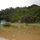 Peces del Amazonas