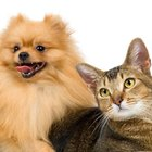 Can Eye Infections Be Passed Among Cats & Dogs?