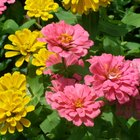Bedding Plants for Dry Conditions