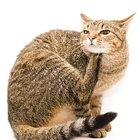 Soluções caseiras para pulgas em meu gato