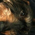 Remedio casero para curar una infección en los ojos de un perro