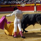 Why do bullfighters wear pink socks?