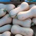 What is the Proper NPK Fertilizer For Growing Butternut Squash?