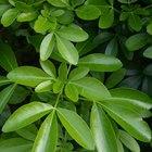 Remedios naturales para hongos blancos vellosos en plantas