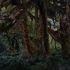 Plantas que crecen en bosques tropicales