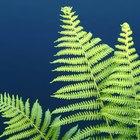 Plantas de interior que eliminan el moho