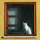 How to Make a Cat Window Perch With No Screws
