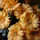 Una lista de flores comunes