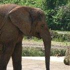 ¿Cómo duermen los elefantes?