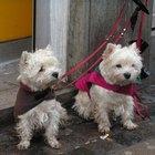 Hallazgos clínicos sobre el cáncer de hígado en perros