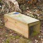 Como construir uma armadilha de coelho simples