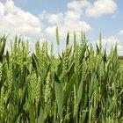 ¿Por qué los agricultores usan pesticidas en sus cultivos?