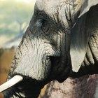 Como fazer uma fantasia de elefante com tromba