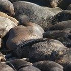 Hábitat del lobo marino