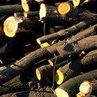 Los efectos de la deforestación en el ecosistema