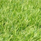 Push Lawn Mower vs. Self-Propelled