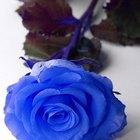 Como pintar rosas brancas de azul