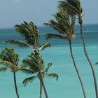 Leyes de inmigración de Aruba