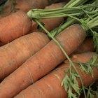 Cómo plantar zanahorias en macetas