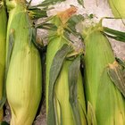 Quanto tempo leva para se cozinhar milho doce fresco?