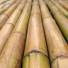 How to Bend Bamboo Sticks