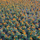Plants That Flower All Summer Long