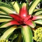 Quais ingredientes as plantas precisam para realizar a fotossíntese