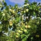 Los pesticidas orgánicos para árboles frutales