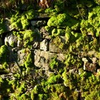 How to clean moss off a stone wall