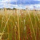 Características dos biomas das pradarias